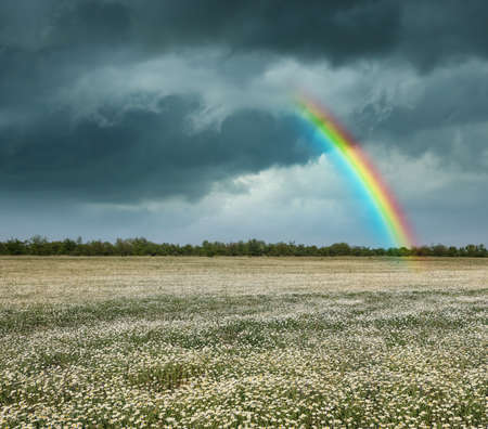Amazing rainbow over chamomile field under stormy sky