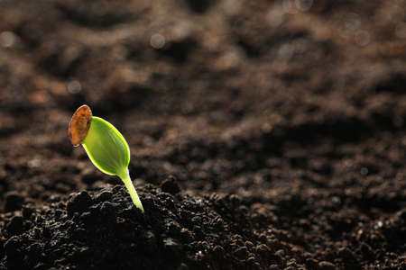 Young vegetable seedling growing in soil outdoors, space for text