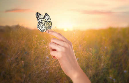 Woman holding beautiful rice paper butterfly in sunlit field, closeup