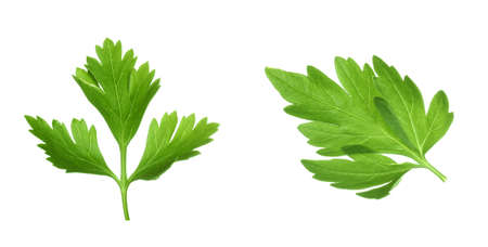 Two green parsley leaves on white background