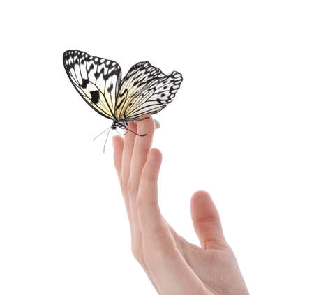 Woman holding beautiful rice paper butterfly on white background, closeup