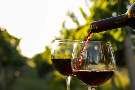 Pouring wine from bottle into glass in vineyard, closeup