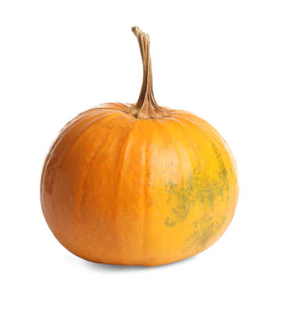 Fresh ripe pumpkin isolated on white. Organic plant Foto de archivo