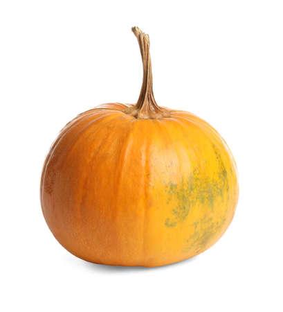 Fresh ripe pumpkin isolated on white. Organic plant Stock fotó