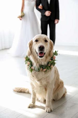 Adorable golden Retriever wearing wreath made of beautiful flowers on wedding