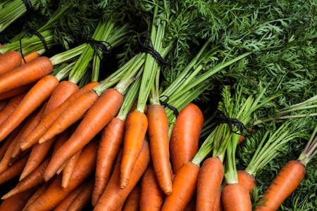 Bunches of tasty raw carrots as background