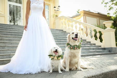 Bride and adorable dogs wearing wreathes made of beautiful flowers outdoors, closeup