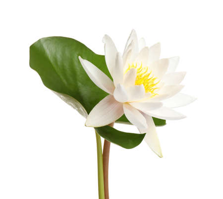 Beautiful blooming lotus flower with green leaf isolated on white Zdjęcie Seryjne
