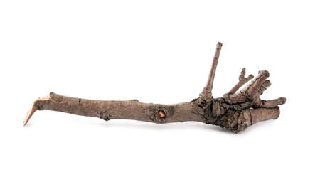 Old dry tree branch isolated on white