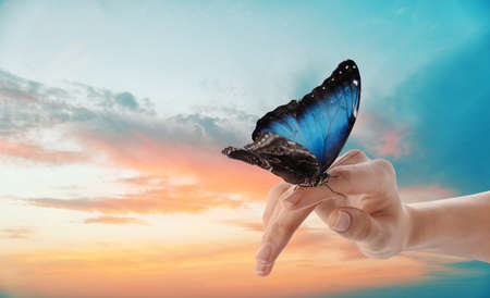 Woman holding beautiful morpho butterfly against sunset sky, closeup