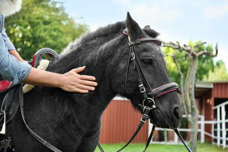 Senior man stroking beautiful black pony outdoors, closeup