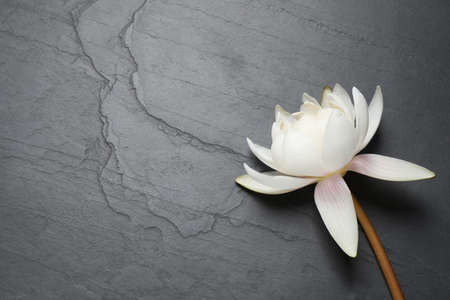 Beautiful white lotus flower on gray table, top view. Space for text Stock Photo