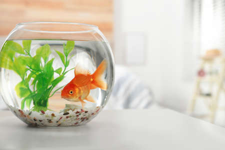 Beautiful bright small goldfish in round glass aquarium on table indoors. Space for text