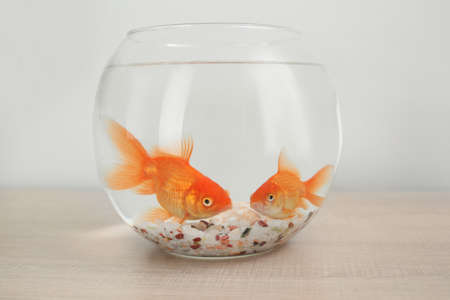 Beautiful bright small goldfishes in round glass aquarium on wooden table