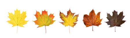 Set of autumn leaves on white background. Banner design