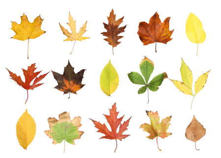Set of different autumn leaves on white background