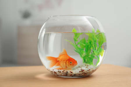 Beautiful bright small goldfish in round glass aquarium on wooden table indoors