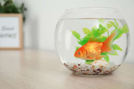 Beautiful bright small goldfish in round glass aquarium on wooden table. Space for text Standard-Bild