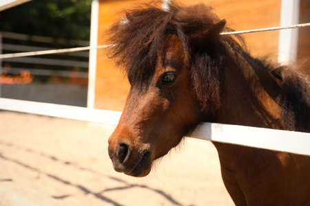 Cute pony in paddock on sunny day. Pet horse