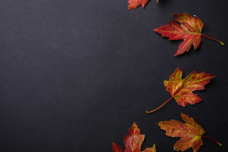 Colorful autumn leaves on black background, flat lay. Space for text