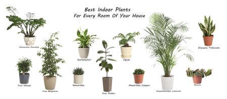 Set of best house plants on white background. Banner design Standard-Bild