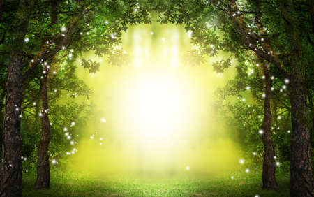 Fantasy world. Enchanted forest with magic lights and sunlit way between trees