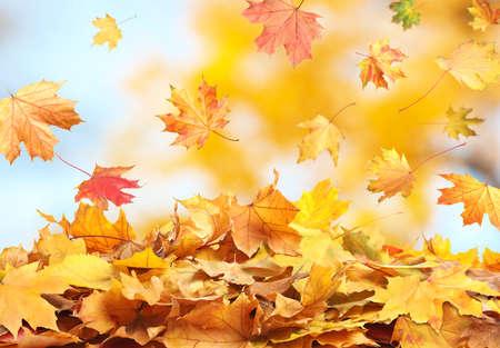 Autumn season. Beautiful leaves falling in park Imagens