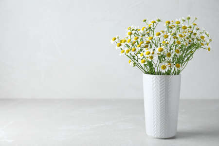 Vase with beautiful chamomile flowers on light gray table. Space for text
