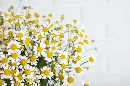 Beautiful chamomile flowers on white background, closeup