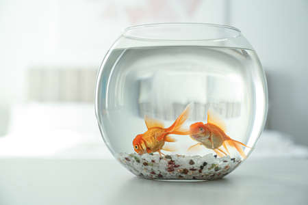 Beautiful bright goldfish in aquarium on table at home