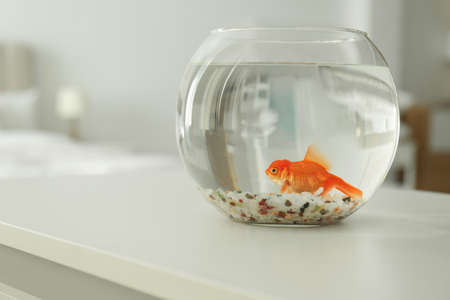 Beautiful bright goldfish in aquarium on table at home. Space for text
