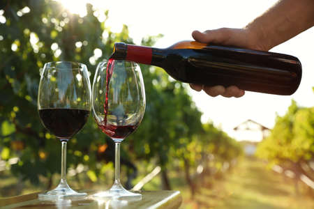 Man pouring wine from bottle into glasses at vineyard, closeup Standard-Bild