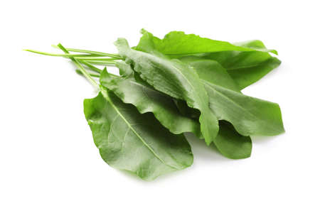 Bunch of fresh green sorrel leaves on white background