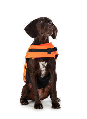 Dog rescuer in life vest on white background