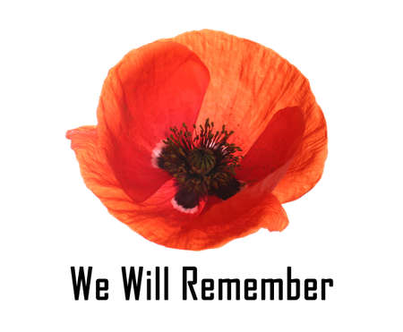 Remembrance day card. Red poppy flower and text We Will Remember on white background Banque d'images
