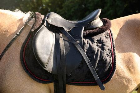 Leather saddle with stirrups on horse, closeup Stock Photo