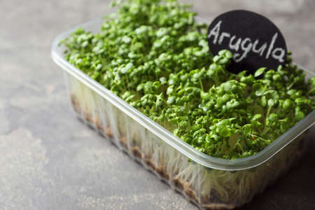 Sprouted arugula seeds in plastic container on grey table, closeup