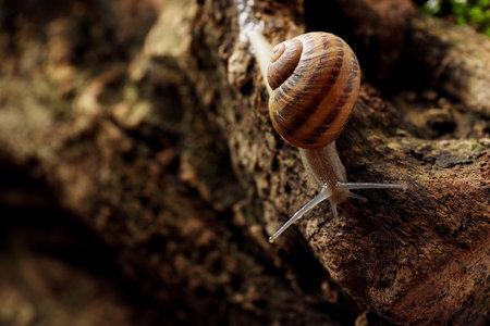 Common garden snail crawling on tree bark, closeup Reklamní fotografie