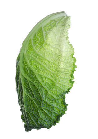 Leaf of fresh savoy cabbage isolated on white
