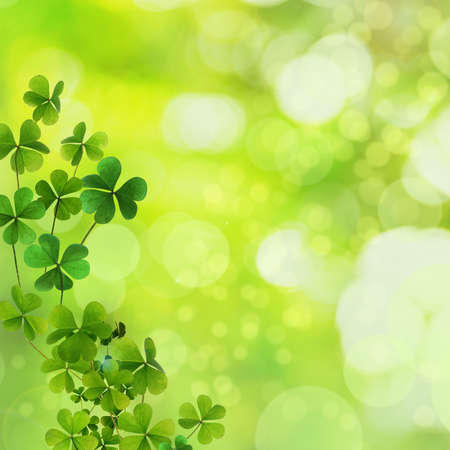 Fresh clover leaves on green background, space for text. St. Patrick's Day celebration