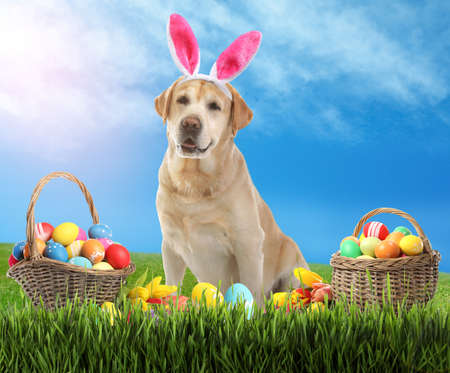 Colorful Easter eggs and cute dog with bunny ears headband outdoors