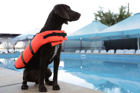 Dog rescuer in life vest near swimming pool outdoors