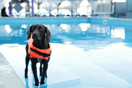 Dog rescuer wearing life vest in swimming pool outdoors