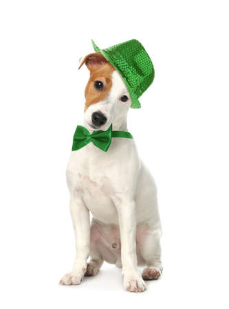 Cute Jack Russel Terrier with leprechaun hat and bow tie on white background. St. Patrick's Day