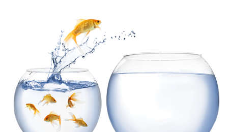Beautiful goldfish jumping out of water on white background