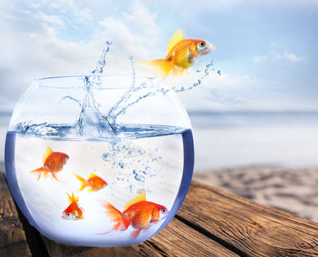 Goldfish jumping out of water and beautiful seascape on background