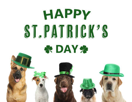 Happy St. Patrick's Day. Cute dogs with leprechaun hats on white background