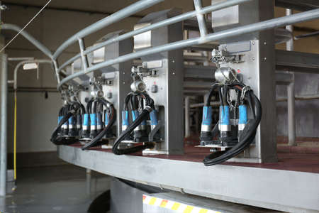 Automatic milking systems in parlor. Modern dairy farm Banque d'images