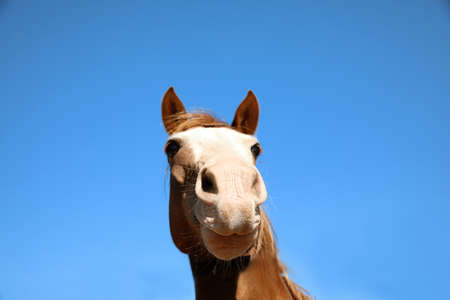 Chestnut horse at fence outdoors on sunny day, closeup. Beautiful pet