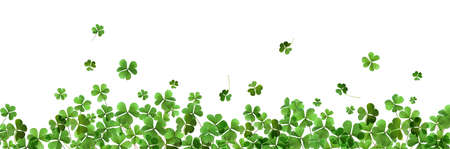 Fresh green clover leaves on white background, banner design. St. Patrick's Day Banque d'images